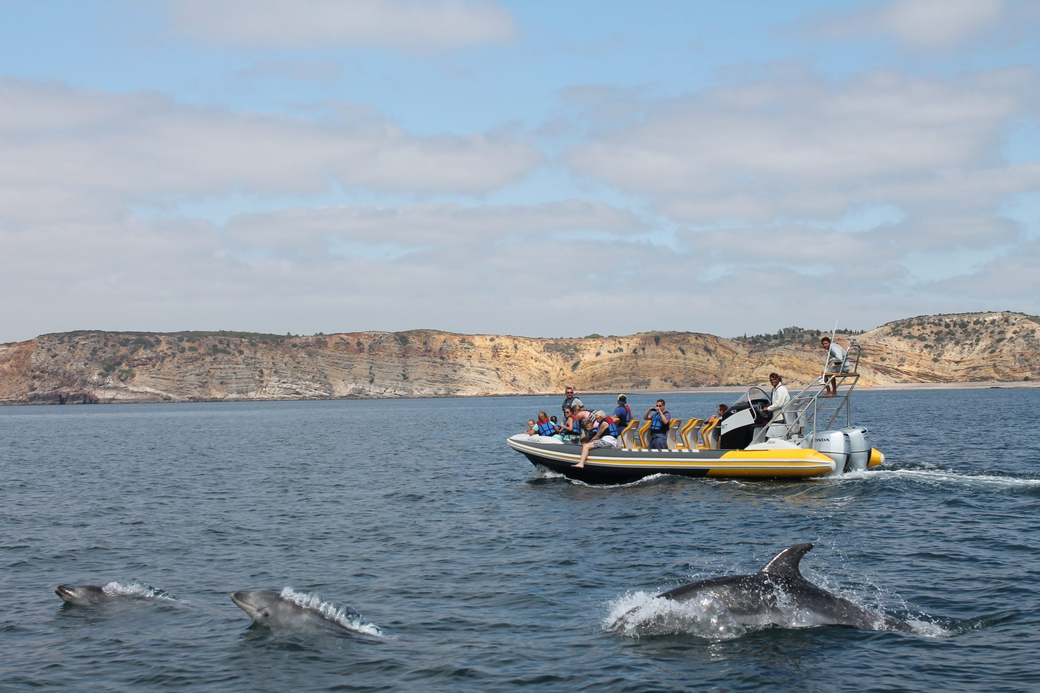 dolphin watching in Luz