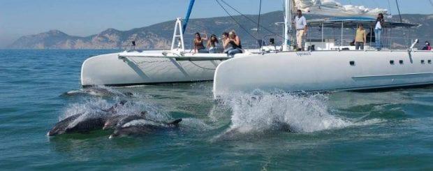 How to get from Lisbon to Setúbal vertigem azul - dolphin watching from Setubal