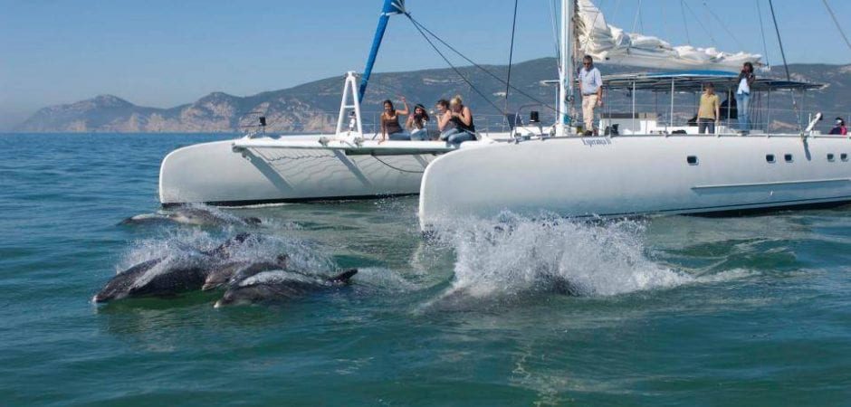 How to get from Lisbon to Setúbal vertigem azul - dolphin watching from Setubal
