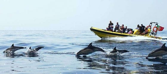 Dolphins Albufeira