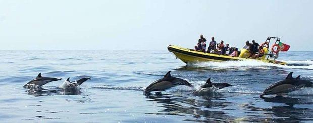Dolphins Albufeira