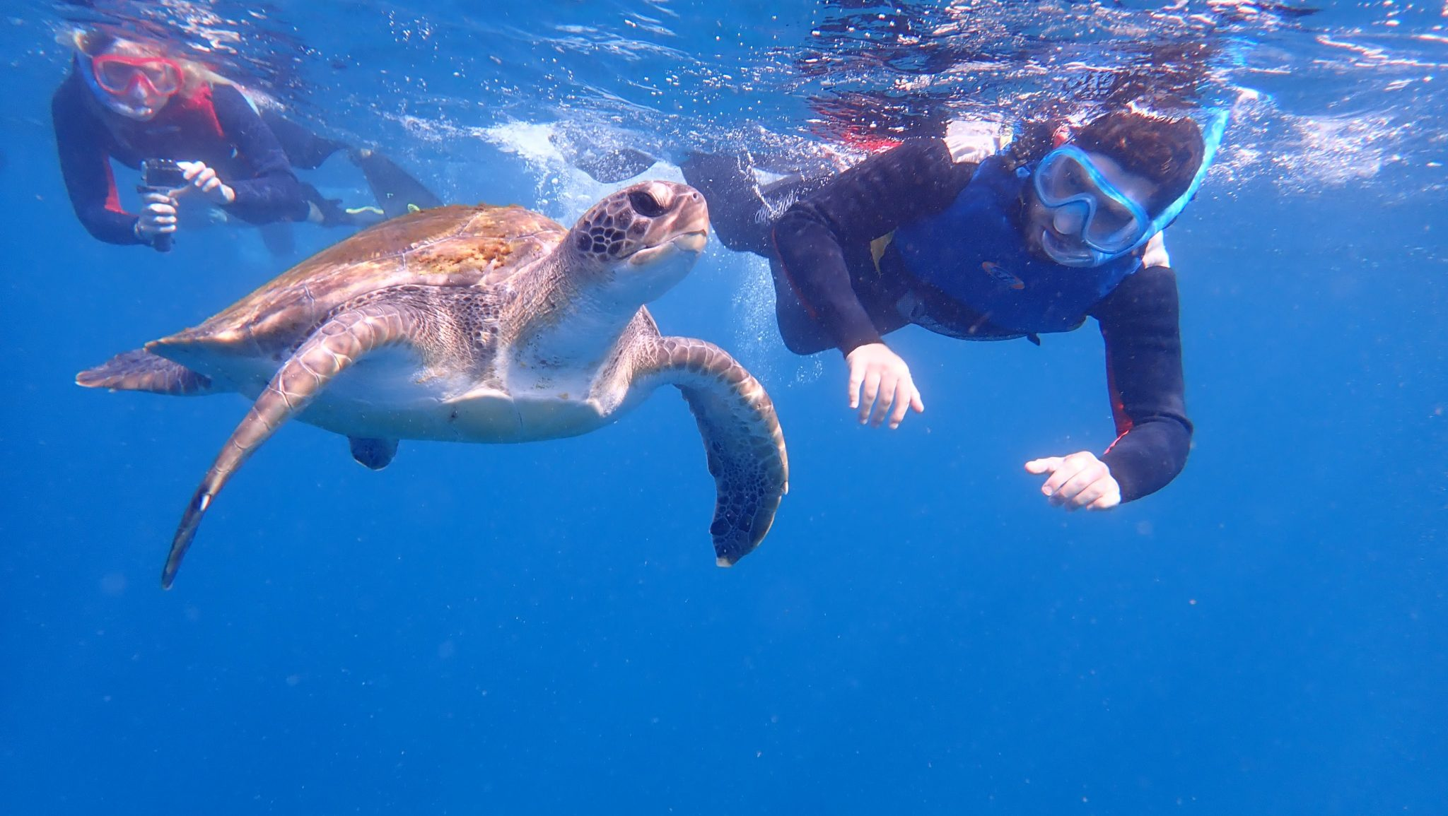 snorkeling with turtles in Los Cristianos