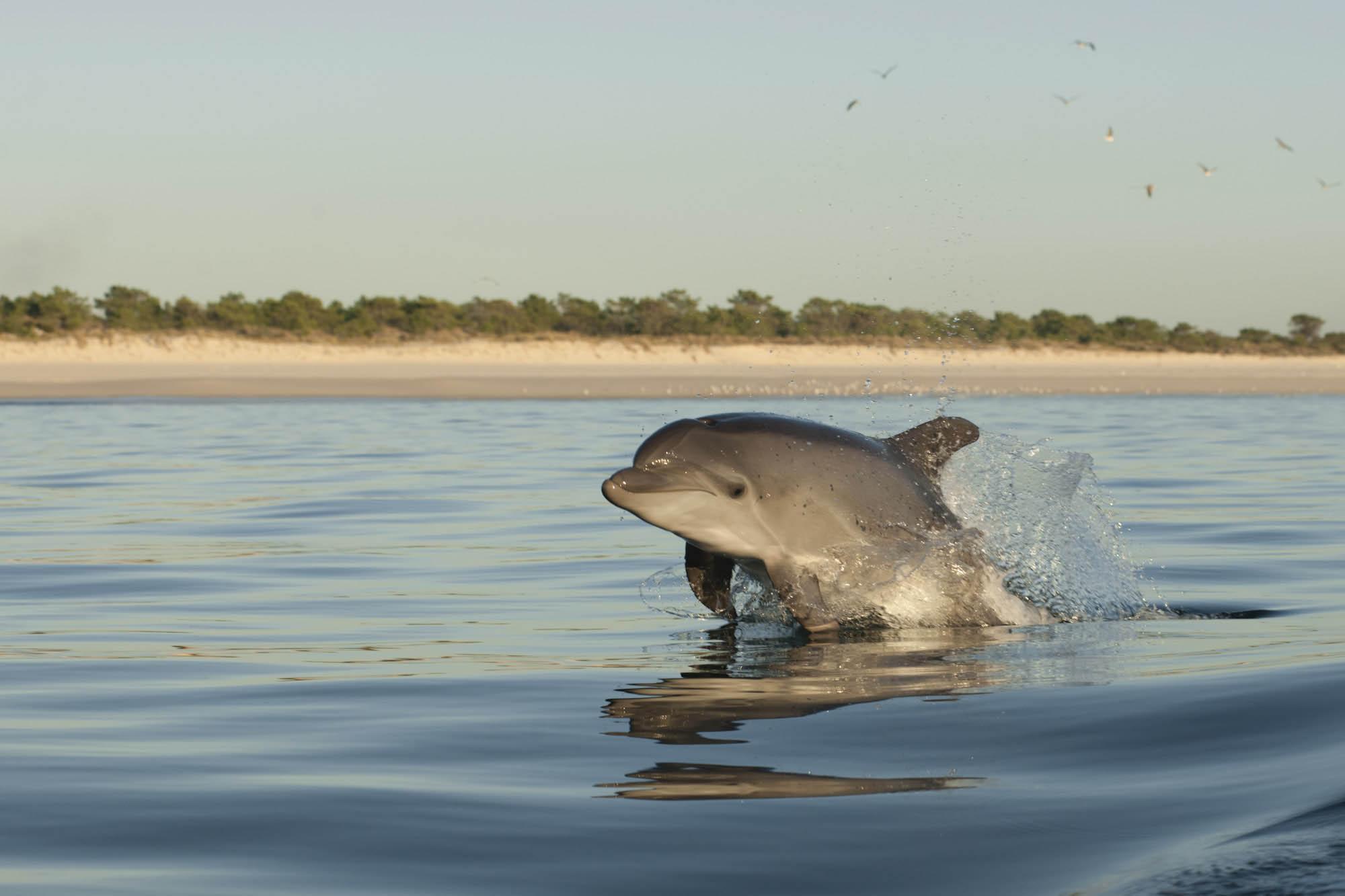 dolphins in Setúbal