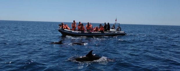 Dolphin watching tour in Portimão