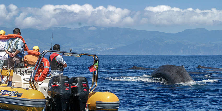 Whale watching is a must when visiting the Azores!