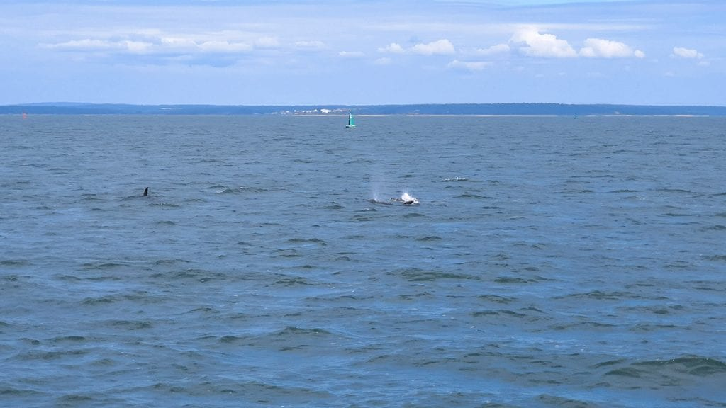 We could not get enough of observing the dolphins!