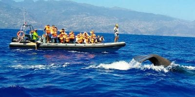 Madeira whale watching