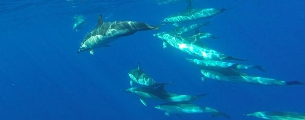swim with dolphins in Madeira