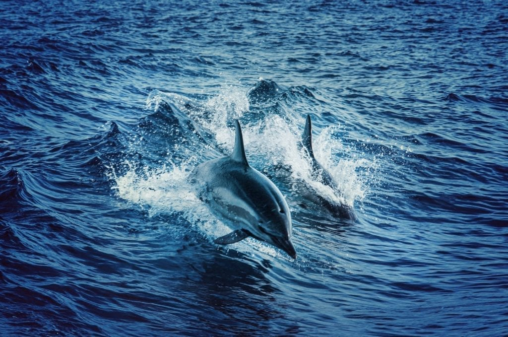 Travel Destinations With Marine Excursions