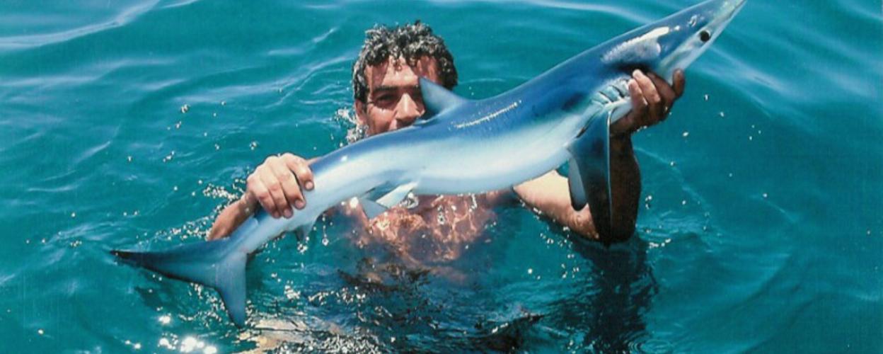 Cover for Shark fishing tour in Vilamoura