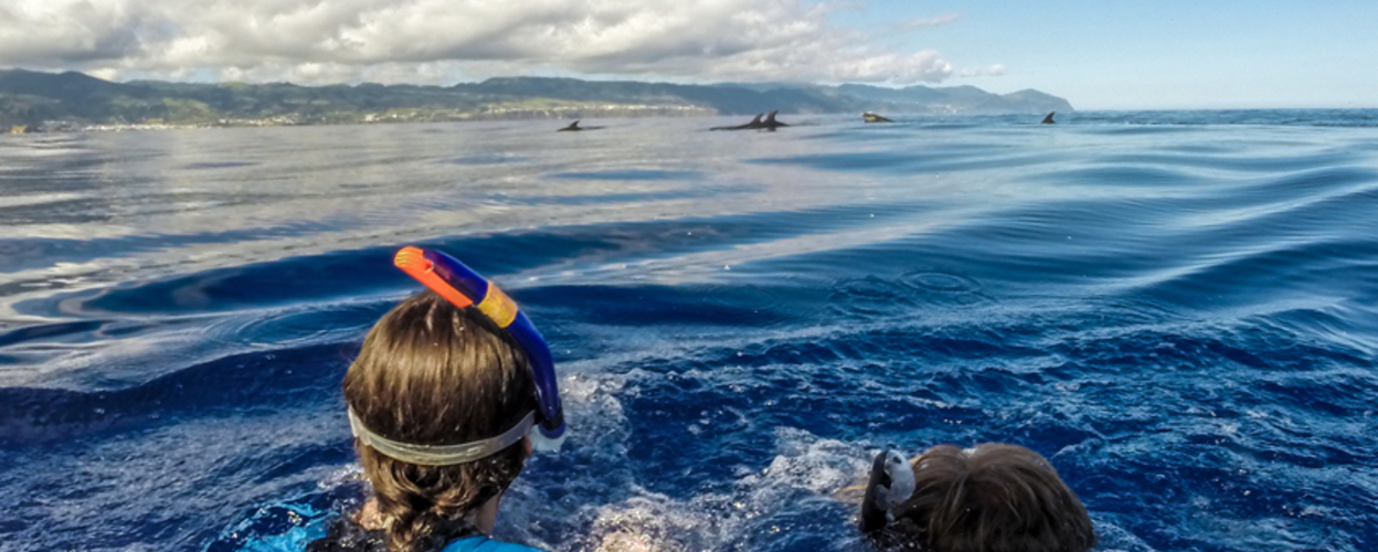 Cover for Snorkeling with dolphins in São Miguel