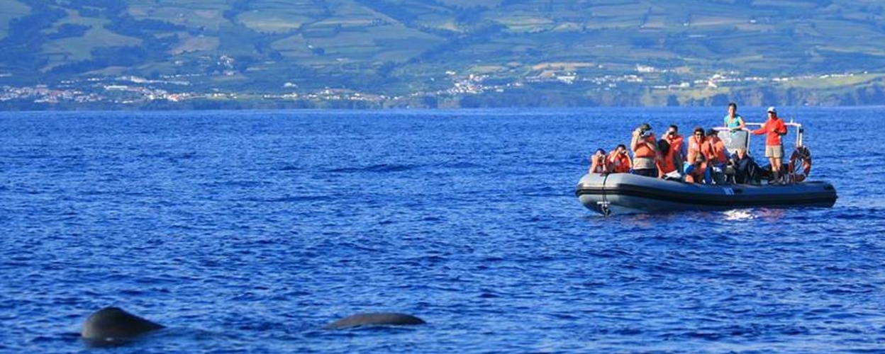 Cover for Whale and dolphin tour to the islet Vila Franca