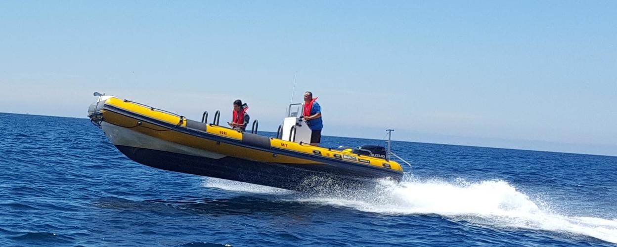 Cover for Speedy boat tour in Peniche
