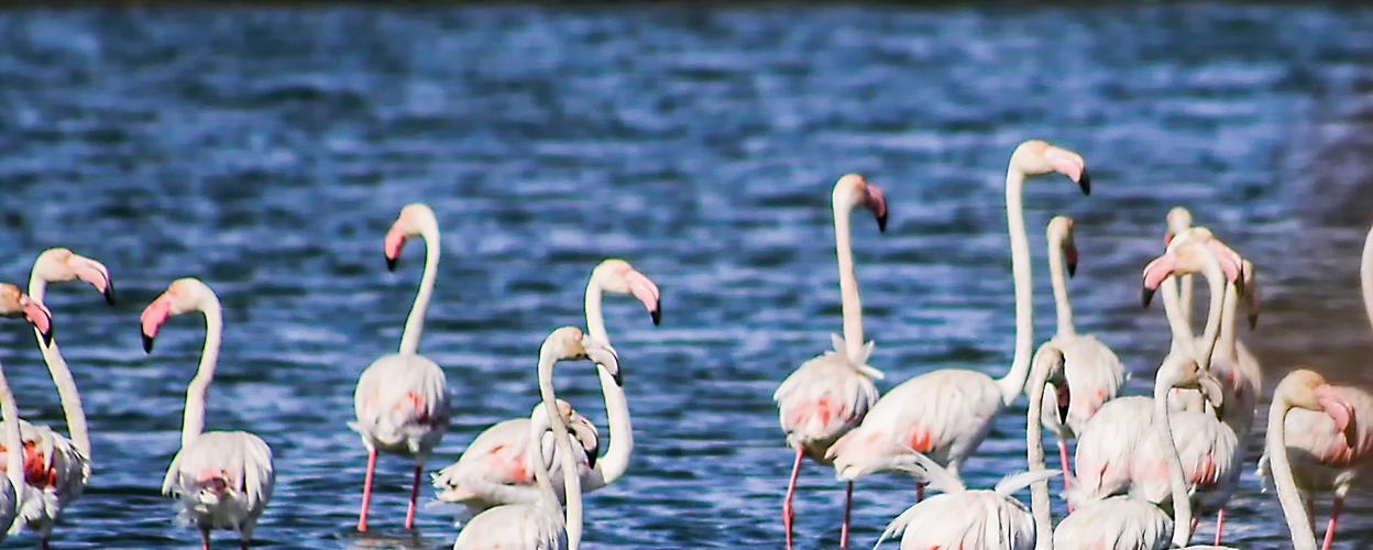Birdwatching in Tavira cover