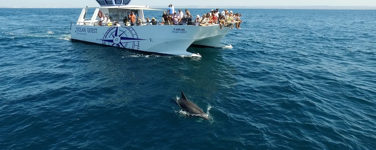 Dolphin watching in Vilamoura