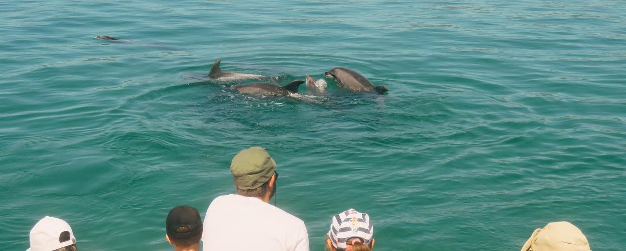 Setúbal dolphin watching