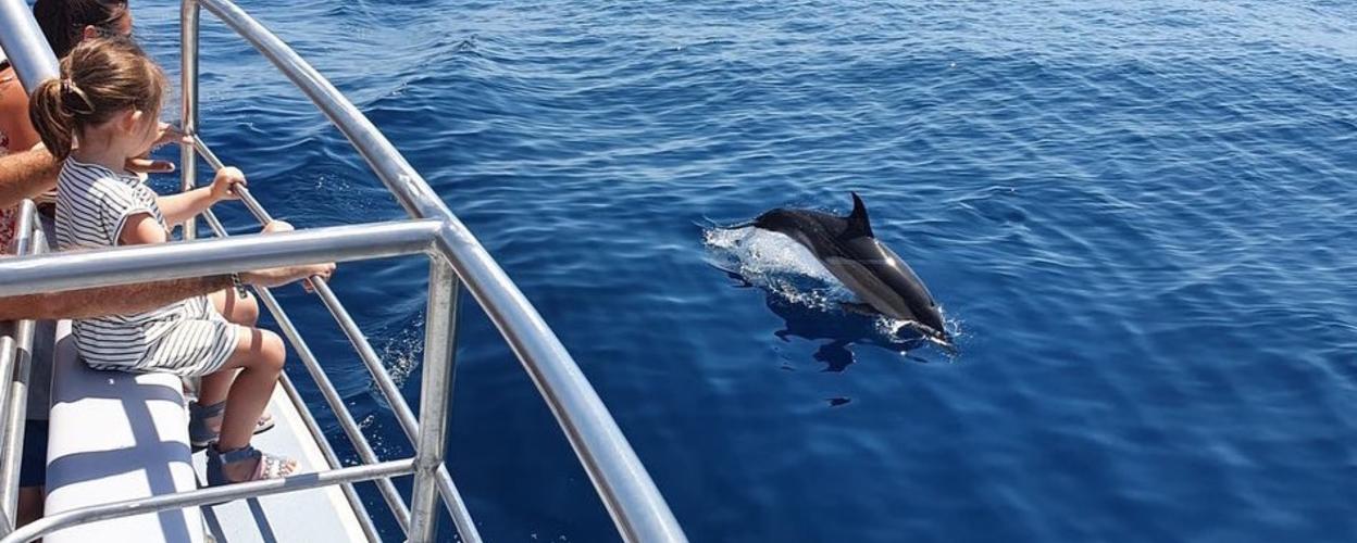 Lagos dolphin adventure