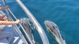 Family dolphin watching in Lagos