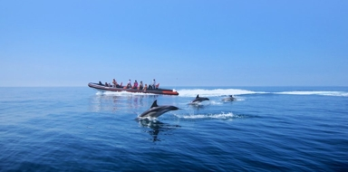 Cover for Dolphin safari and caves boat trip in Vilamoura