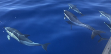 Cover for Whales & dolphin watching boat trip from Madeira