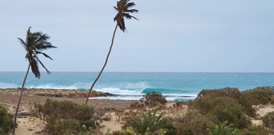 Cover for Learn how to surf in Boa Vista