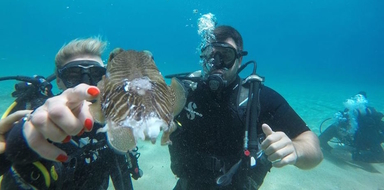Scuba diving in Mykonos cover photo