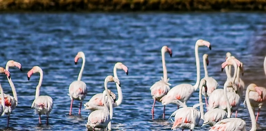Birdwatching in Tavira cover