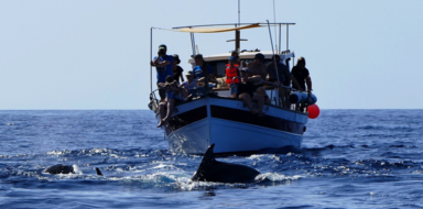 Cover for whale watching in La Gomera