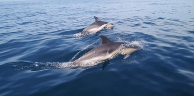 dolphin watching in Peniche