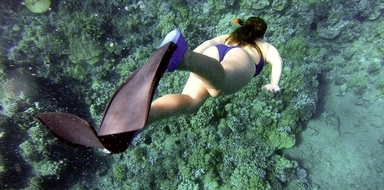 Snorkeling in Tenerife does not require previous experience