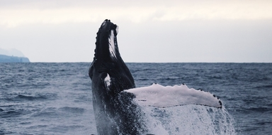 Whale watching and Furnas boat tour in Azores