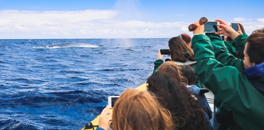 Azores boat tour to the princess ring and whale watching