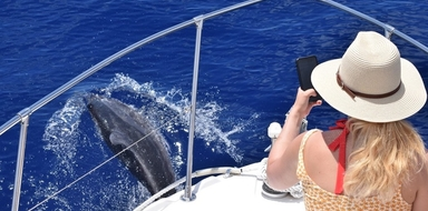 Private whale and dolphin watching tour in Madeira