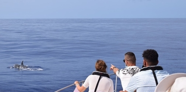 Whale and dolphin observation in Madeira