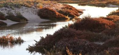 Be impressed by the beauty of Ria Formosa