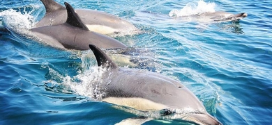Dolphins watching Albufeira