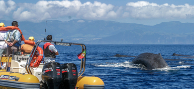 Whale watching and islet boat tour in São Miguel