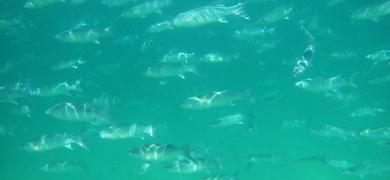 Snorkeling Olhão