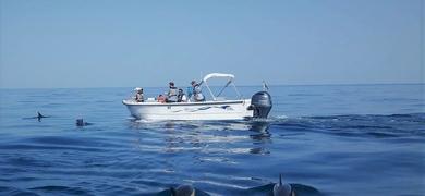 Fishing trip in Faro dolphins