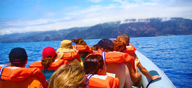 Dolphin watching in Madeira