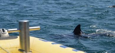 dolphin watching- faro