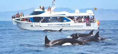 Waters whales and dolphins
