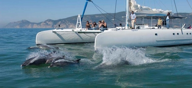 dolphin watching from Setubal