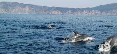 Cover for Dolphin watching in Sesimbra