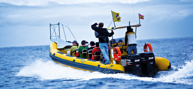 Cover for Whale watching in La Palma