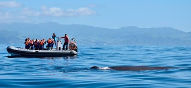 Cover for Dolphin and whale watching in Azores