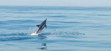 dolphin watching sealife -fishing
