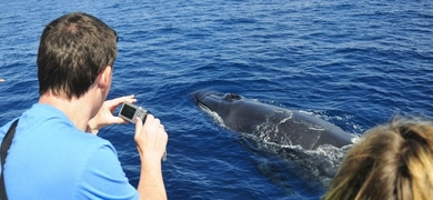 Cover for Search for whales and dolphins in Gran Canaria