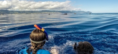 If you're lucky you can even go swimming with dolphins