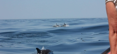 We can find a lot of marine life while sailing in Portimão